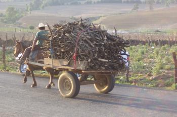 Transportando leña en Michoacán