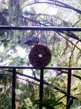 fuel briquette, bird seed briquette